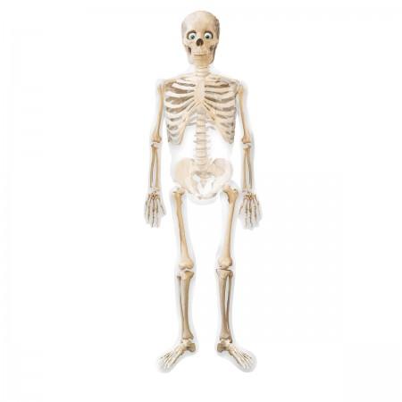 """75"""" Mr Bones Airwalker  (1)"""