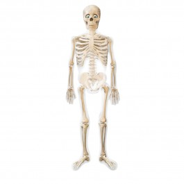 "75"" Mr Bones Airwalker  (1)"
